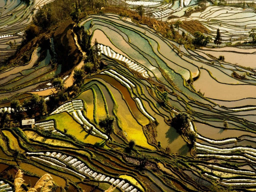 the-rice-terraces-of-yunnan-china